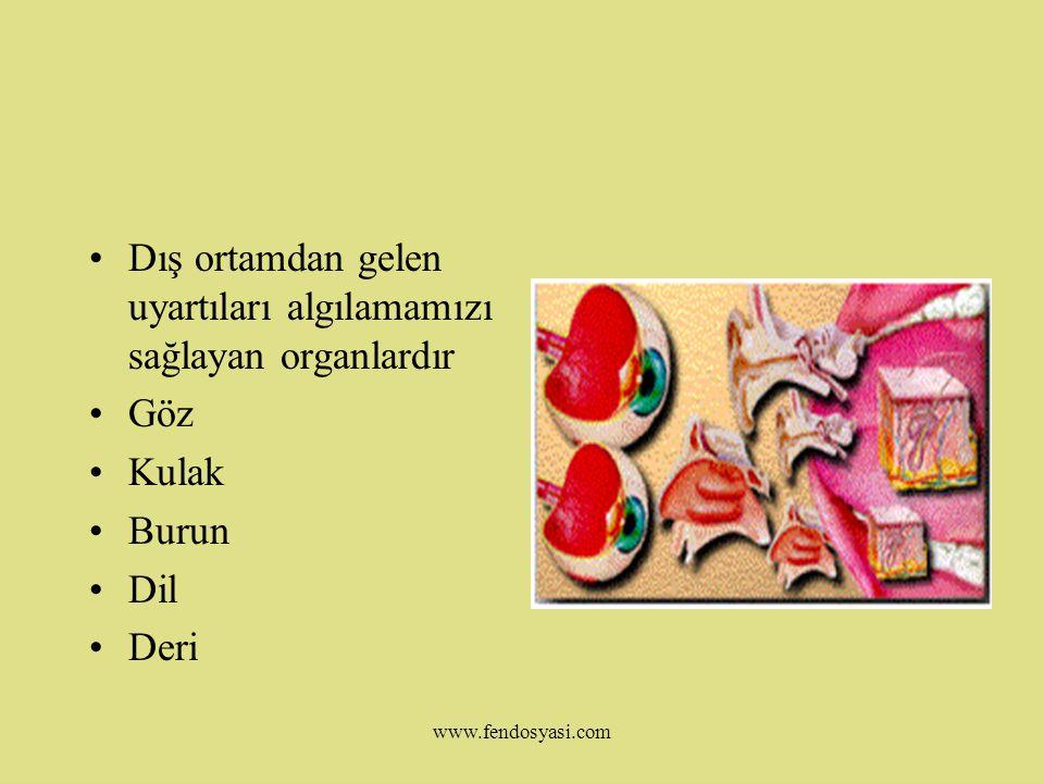 www.fendosyasi.com DUYU ORGANLARI www.fendosyasi.com
