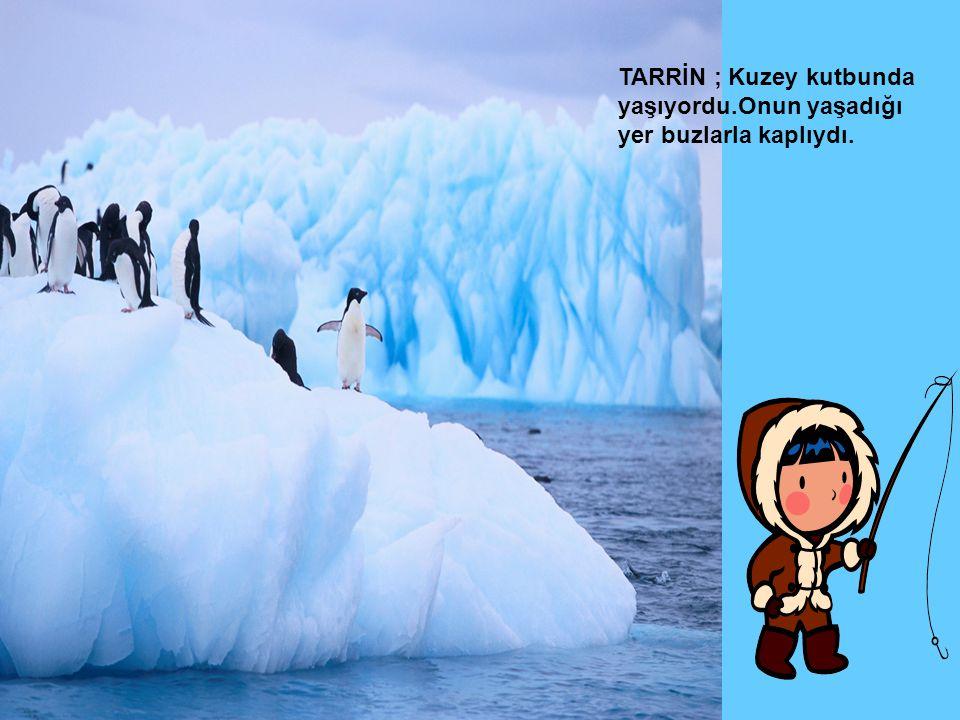 TARRİN ; Kuzey kutbunda yaşıyordu.Onun yaşadığı yer buzlarla kaplıydı.