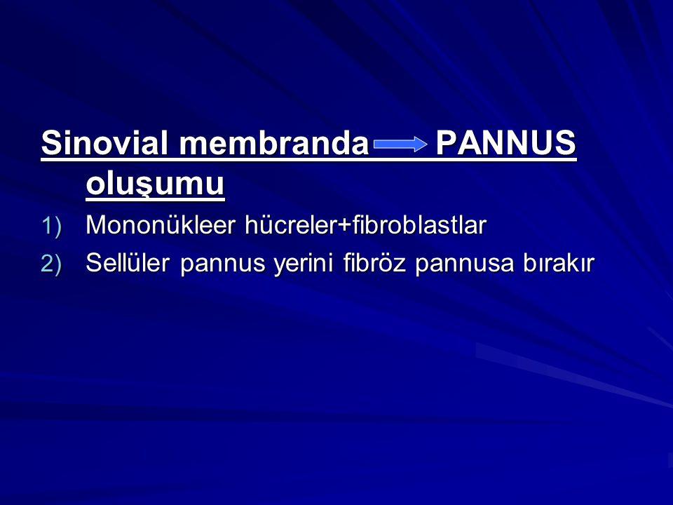 Sinovial membranda PANNUS oluşumu 1) Mononükleer hücreler+fibroblastlar 2) Sellüler pannus yerini fibröz pannusa bırakır