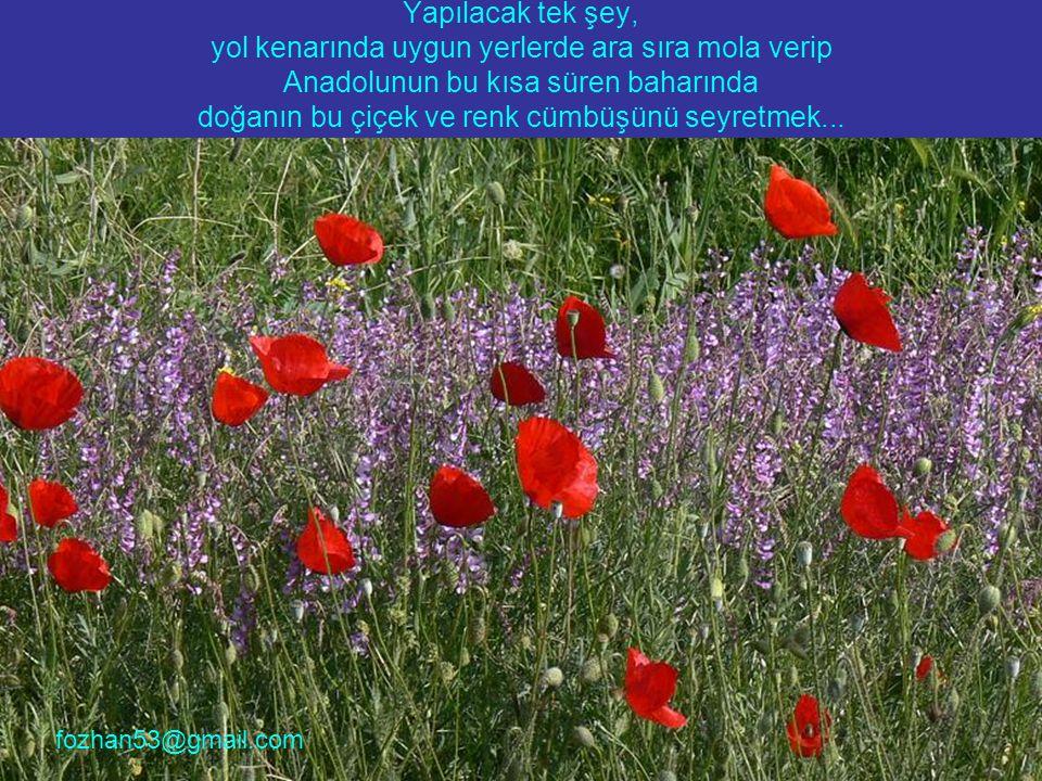 Yapılacak tek şey, yol kenarında uygun yerlerde ara sıra mola verip Anadolunun bu kısa süren baharında doğanın bu çiçek ve renk cümbüşünü seyretmek...