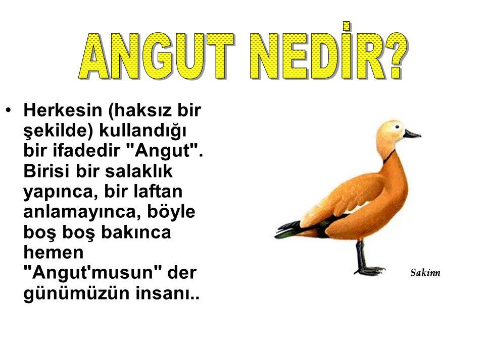 Herkesin (haksız bir şekilde) kullandığı bir ifadedir Angut .