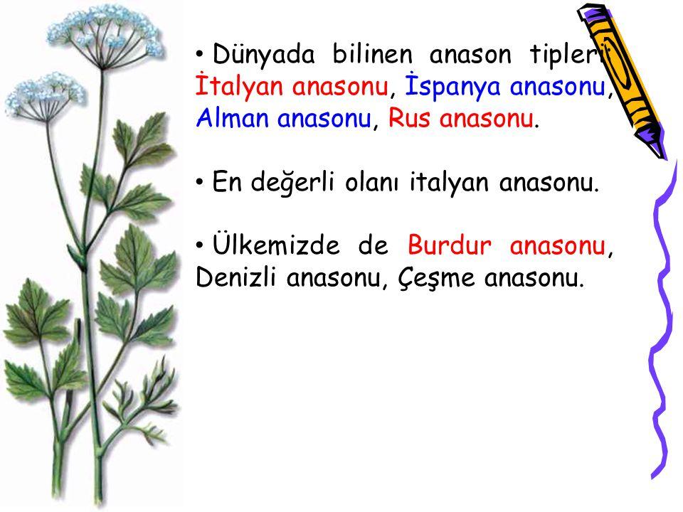 Dünyada bilinen anason tipleri: İtalyan anasonu, İspanya anasonu, Alman anasonu, Rus anasonu. En değerli olanı italyan anasonu. Ülkemizde de Burdur an