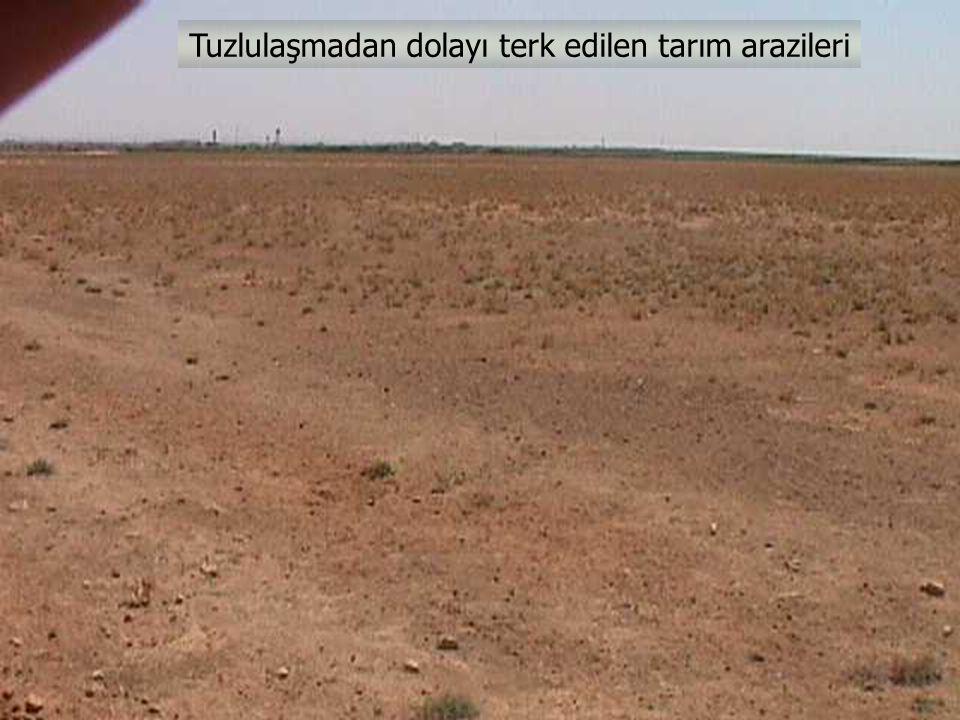 Tuzlulaşmadan dolayı terk edilen tarım arazileri