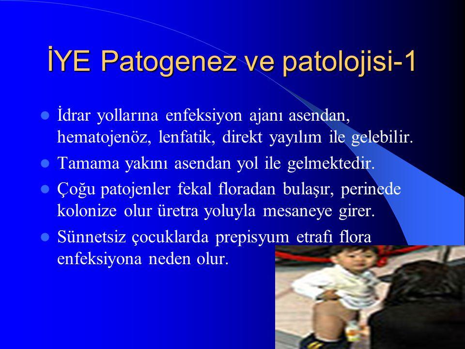 16 İYE Patogenez ve patolojisi-1 İdrar yollarına enfeksiyon ajanı asendan, hematojenöz, lenfatik, direkt yayılım ile gelebilir. Tamama yakını asendan