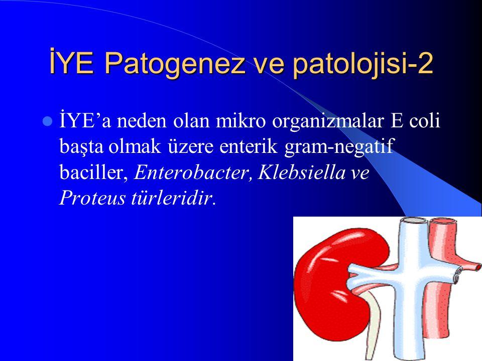 17 İYE Patogenez ve patolojisi-2 İYE'a neden olan mikro organizmalar E coli başta olmak üzere enterik gram-negatif baciller, Enterobacter, Klebsiella