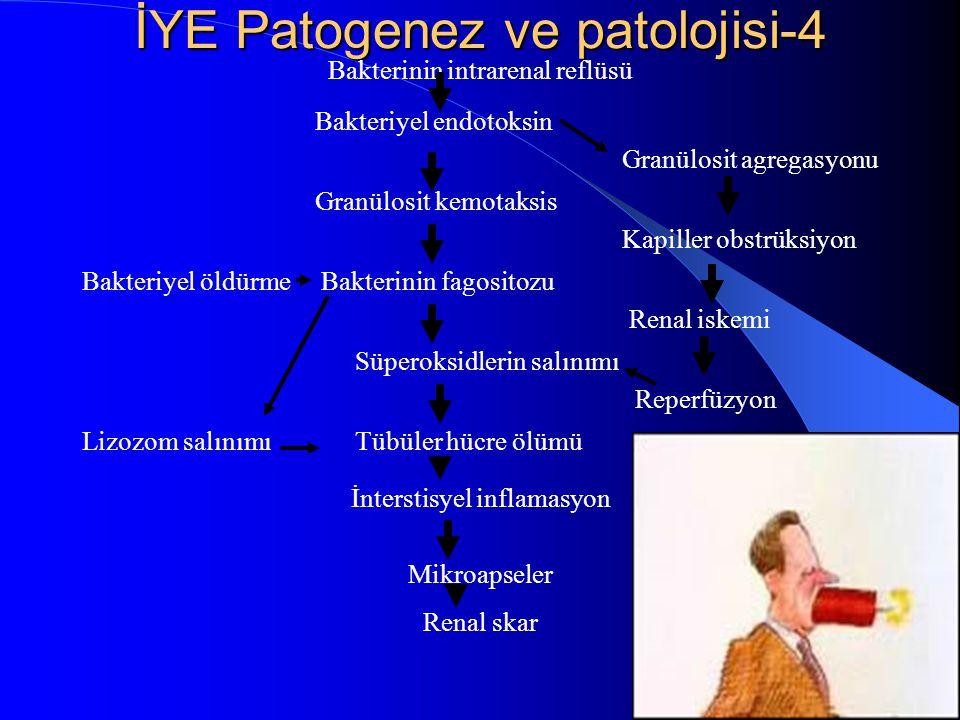 19 İYE Patogenez ve patolojisi-4 Bakterinin intrarenal reflüsü Bakteriyel endotoksin Granülosit agregasyonu Granülosit kemotaksis Kapiller obstrüksiyo