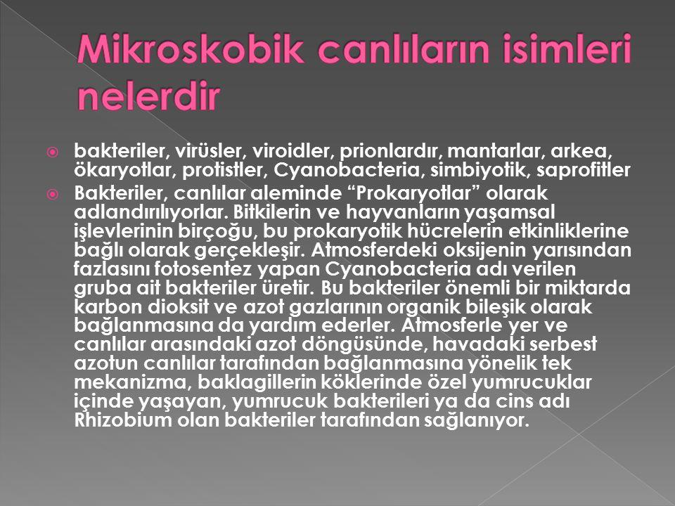  1-) Tifo, Kolera, Verem, Tetanoz, Sıtma gibi hastalıklara neden olur. 2-) Besinlerin bozulmasına neden olur.