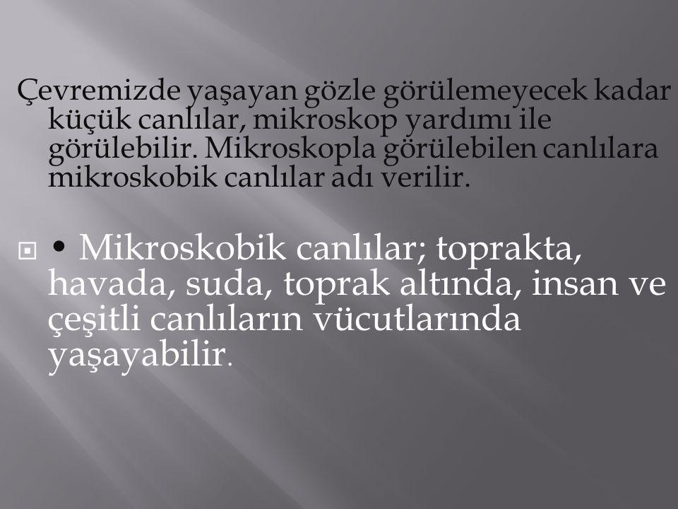 BİR TÜR MİKROSKOBİK MANTAR