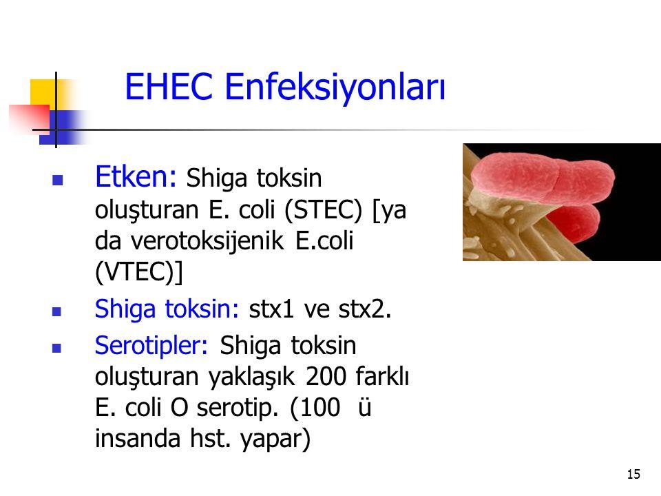 15 EHEC Enfeksiyonları Etken: Shiga toksin oluşturan E. coli (STEC) [ya da verotoksijenik E.coli (VTEC)] Shiga toksin: stx1 ve stx2. Serotipler: Shiga