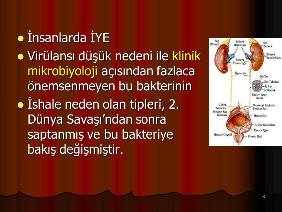 30 Klinik Bulgular Hemolitik Üremik Sendrom (HÜS) -Hemolitik anemi -Trombositopeni -Böbrek yetmezliği -Nörolojik bozukluklar (nöbetler, bilinç bozukluğu) *Ölümle sonuçlanabilir *toksine bağlı gelişir