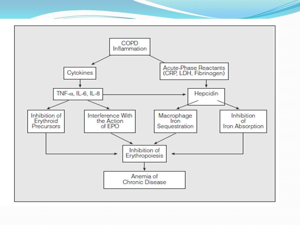 Osteoporoz veKOAH Etioloji Inflamatuar akciğer hastalığı Azalmış fiziksel aktivite Azalmış iskelet kas kitlesi Sistemik inflamasyon Tedavi (steroid ) Yaşlanma (hipogonadism, azalmış kas kitlesi, inaktivite)