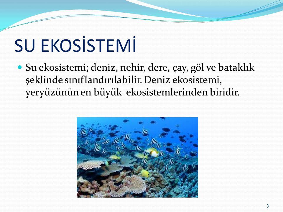 SU EKOSİSTEMİ Su ekosistemi; deniz, nehir, dere, çay, göl ve bataklık şeklinde sınıflandırılabilir. Deniz ekosistemi, yeryüzünün en büyük ekosistemler