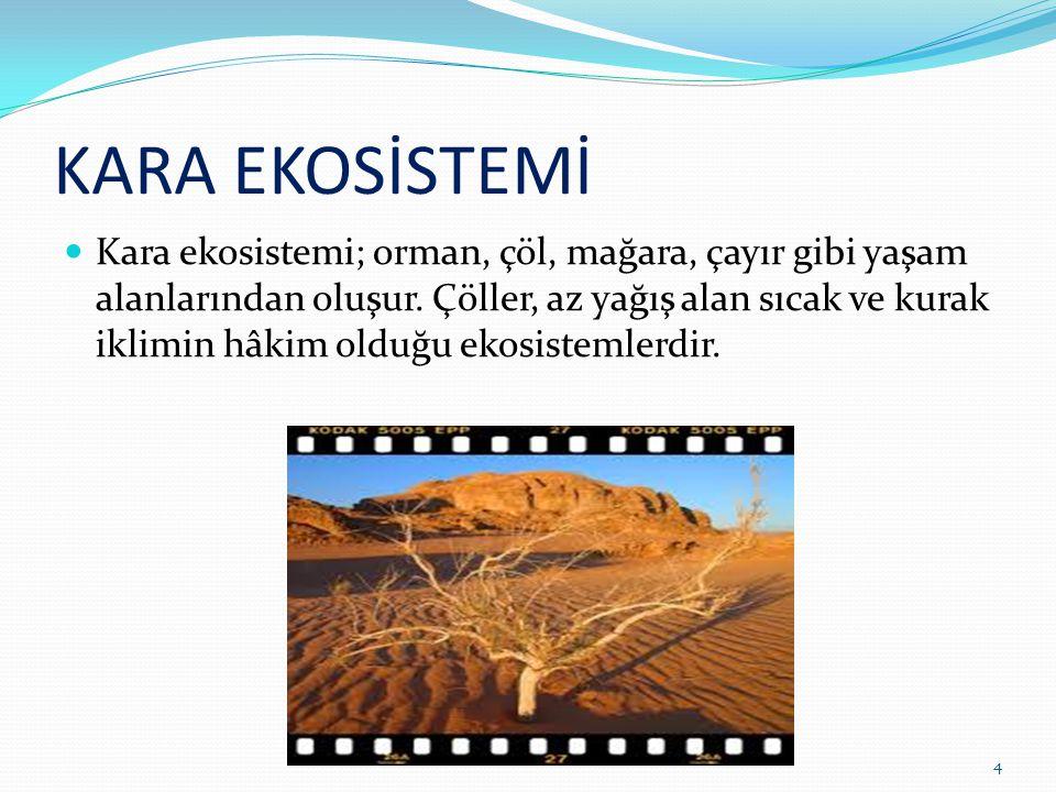KARA EKOSİSTEMİ Kara ekosistemi; orman, çöl, mağara, çayır gibi yaşam alanlarından oluşur. Çöller, az yağış alan sıcak ve kurak iklimin hâkim olduğu e