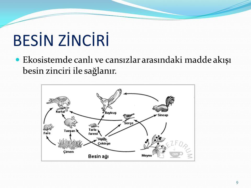 BESİN ZİNCİRİ Ekosistemde canlı ve cansızlar arasındaki madde akışı besin zinciri ile sağlanır. 9