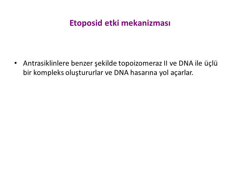Etoposid etki mekanizması Antrasiklinlere benzer şekilde topoizomeraz II ve DNA ile üçlü bir kompleks oluştururlar ve DNA hasarına yol açarlar.