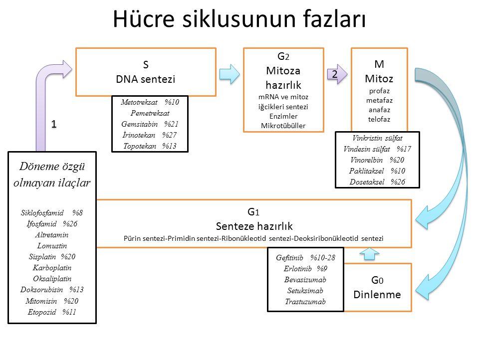 Hücre siklusunun fazları S DNA sentezi G 2 Mitoza hazırlık mRNA ve mitoz iğcikleri sentezi Enzimler Mikrotübüller M Mitoz profaz metafaz anafaz telofa