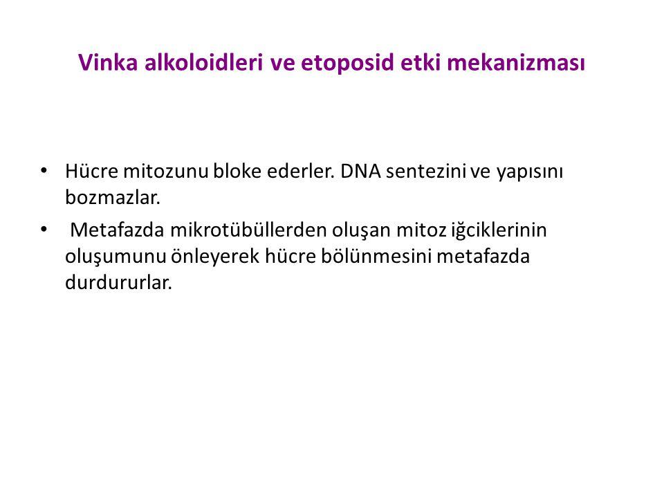 Vinka alkoloidleri ve etoposid etki mekanizması Hücre mitozunu bloke ederler. DNA sentezini ve yapısını bozmazlar. Metafazda mikrotübüllerden oluşan m