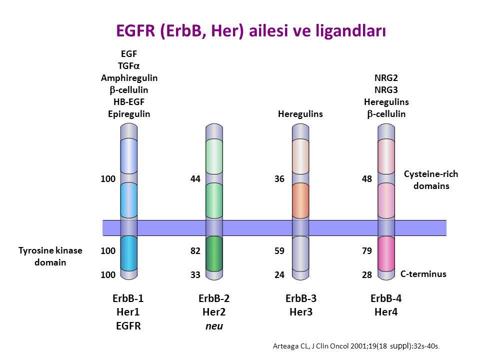 EGF TGF  Amphiregulin  -cellulin HB-EGF Epiregulin Heregulins NRG2 NRG3 Heregulins  -cellulin Cysteine-rich domains Tyrosine kinase domain ErbB-1 H