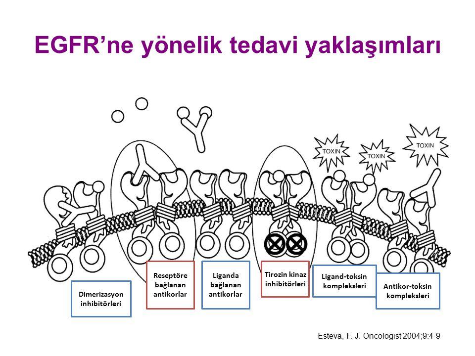 EGFR'ne yönelik tedavi yaklaşımları Esteva, F. J. Oncologist 2004;9:4-9 Dimerizasyon inhibitörleri Reseptöre bağlanan antikorlar Liganda bağlanan anti
