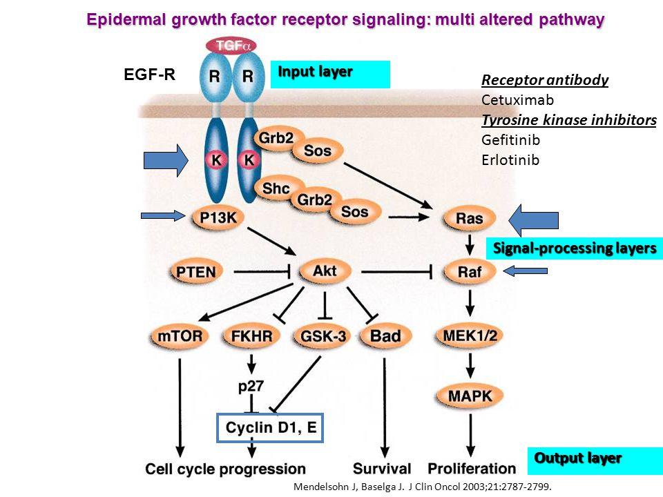 Mendelsohn J, Baselga J. J Clin Oncol 2003;21:2787-2799. EGF-R Epidermal growth factor receptor signaling: multi altered pathway Input layer Signal-pr