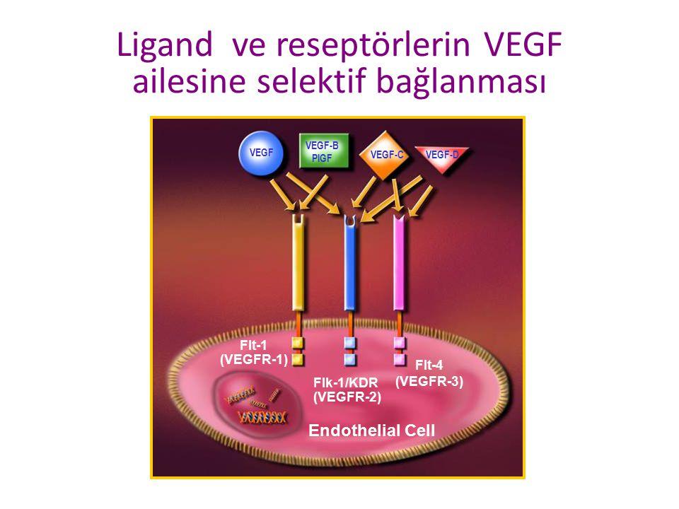 Endothelial Cell VEGF VEGF-B PlGF VEGF-CVEGF-D Flt-4 (VEGFR-3) Flk-1/KDR (VEGFR-2) Flt-1 (VEGFR-1) Ligand ve reseptörlerin VEGF ailesine selektif bağl