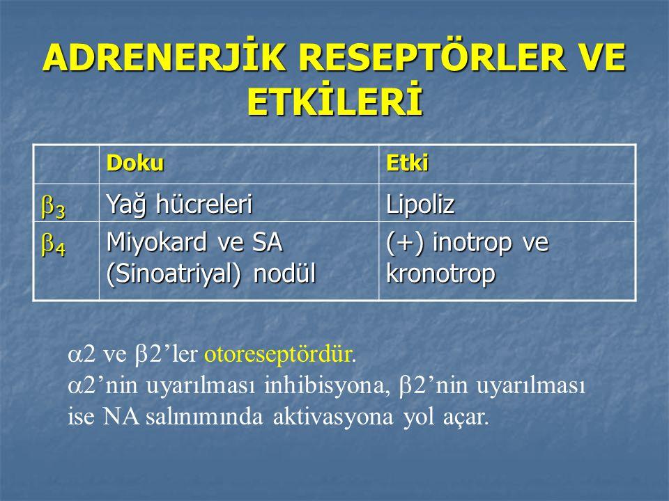 ADRENERJİK RESEPTÖRLER VE ETKİLERİ DokuEtki 3333 Yağ hücreleri Lipoliz 4444 Miyokard ve SA (Sinoatriyal) nodül (+) inotrop ve kronotrop  2 ve