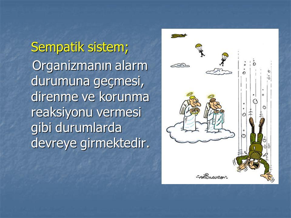 Sempatik sistem; Organizmanın alarm durumuna geçmesi, direnme ve korunma reaksiyonu vermesi gibi durumlarda devreye girmektedir. Organizmanın alarm du