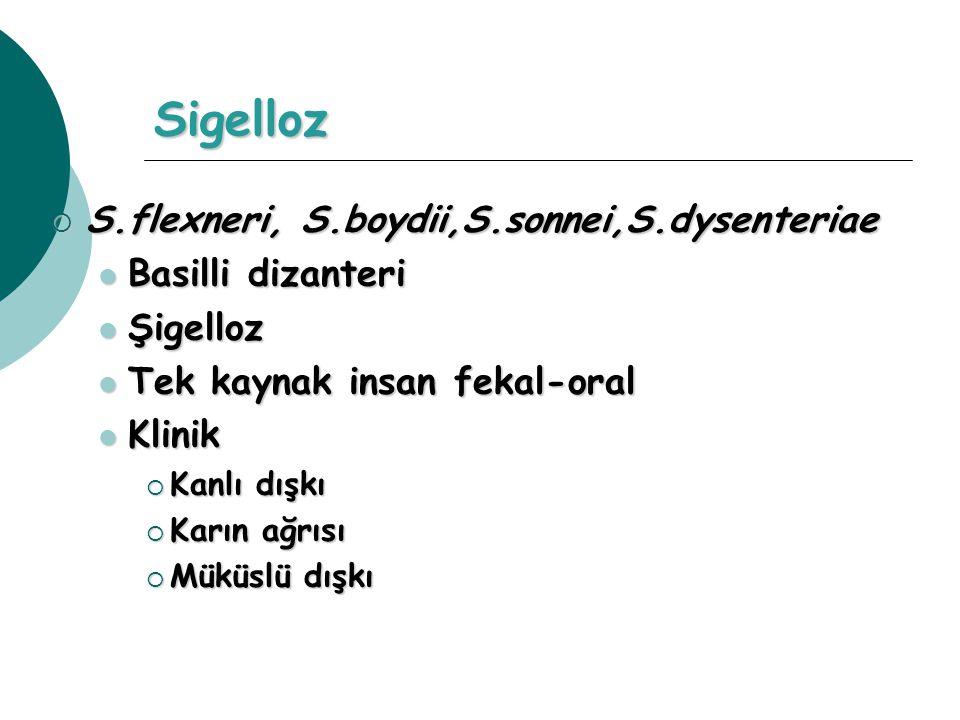 Sigelloz  S.flexneri, S.boydii,S.sonnei,S.dysenteriae Basilli dizanteri Basilli dizanteri Şigelloz Şigelloz Tek kaynak insan fekal-oral Tek kaynak in