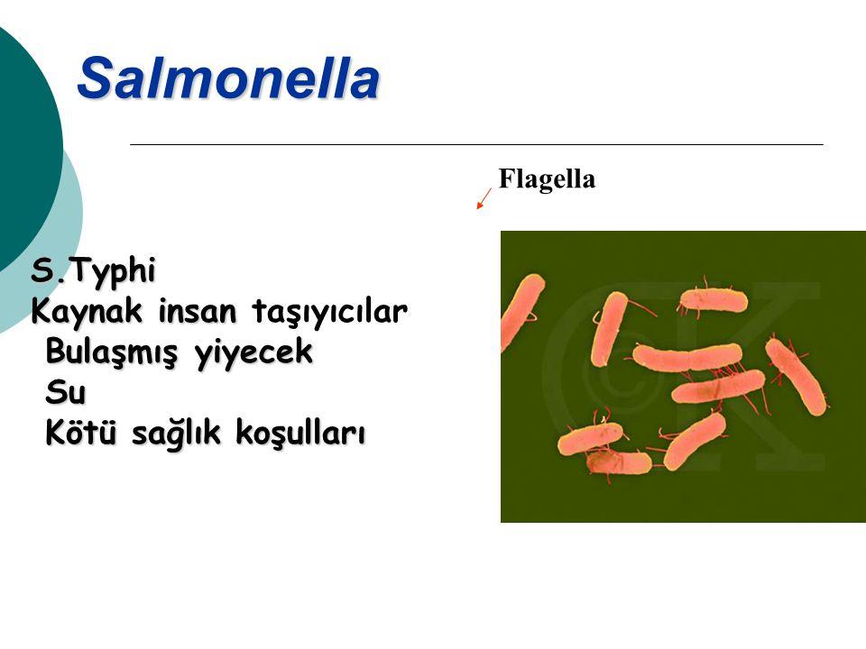 Salmonella Flagella S.Typhi Kaynak insan Kaynak insan taşıyıcılar Bulaşmış yiyecek Bulaşmış yiyecek Su Su Kötü sağlık koşulları Kötü sağlık koşulları