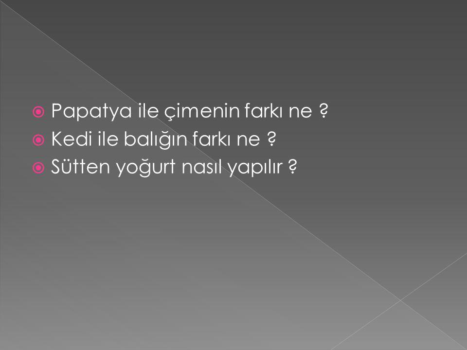  Papatya ile çimenin farkı ne ?  Kedi ile balığın farkı ne ?  Sütten yoğurt nasıl yapılır ?