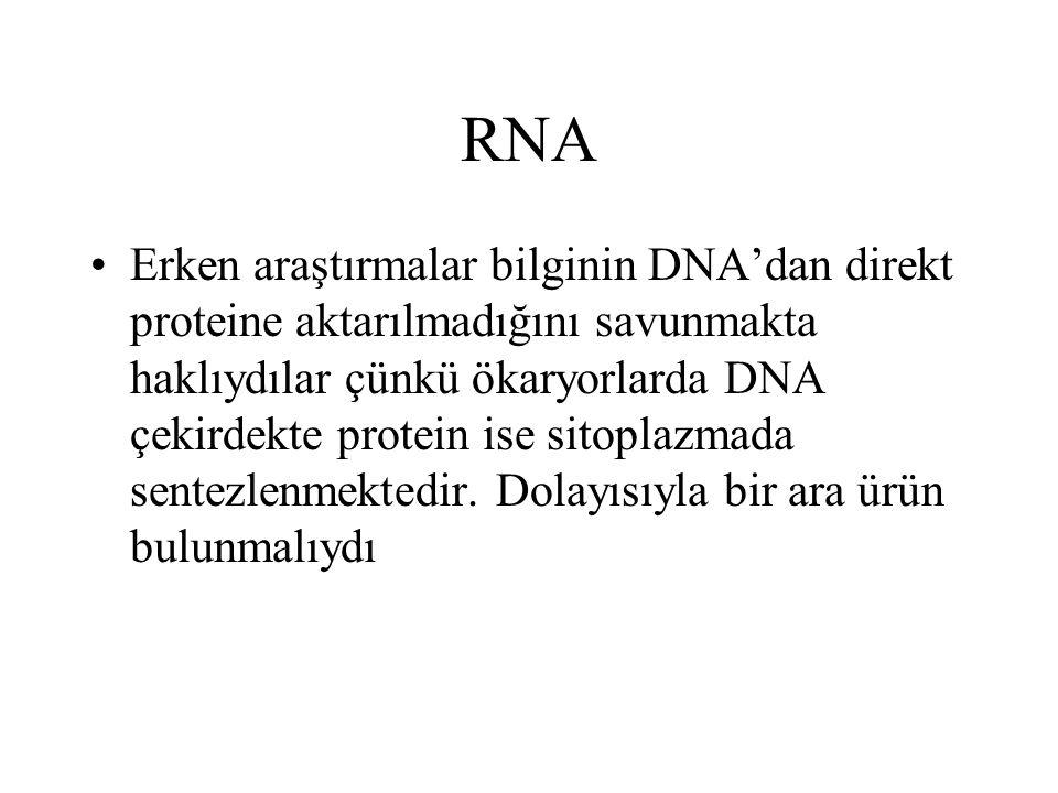 RNA Erken araştırmalar bilginin DNA'dan direkt proteine aktarılmadığını savunmakta haklıydılar çünkü ökaryorlarda DNA çekirdekte protein ise sitoplazm