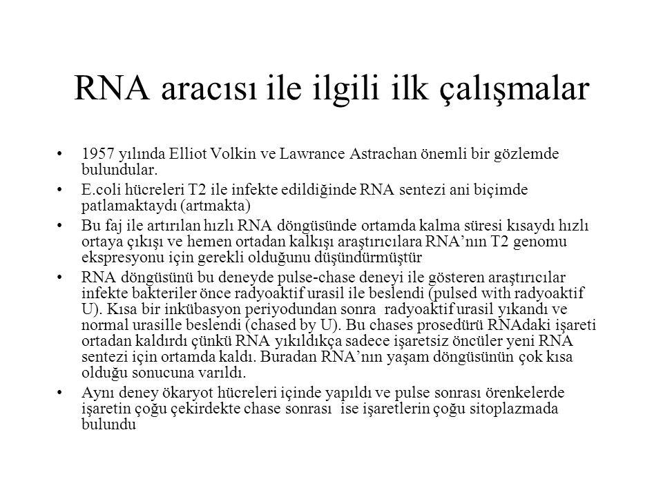 RNA aracısı ile ilgili ilk çalışmalar 1957 yılında Elliot Volkin ve Lawrance Astrachan önemli bir gözlemde bulundular. E.coli hücreleri T2 ile infekte