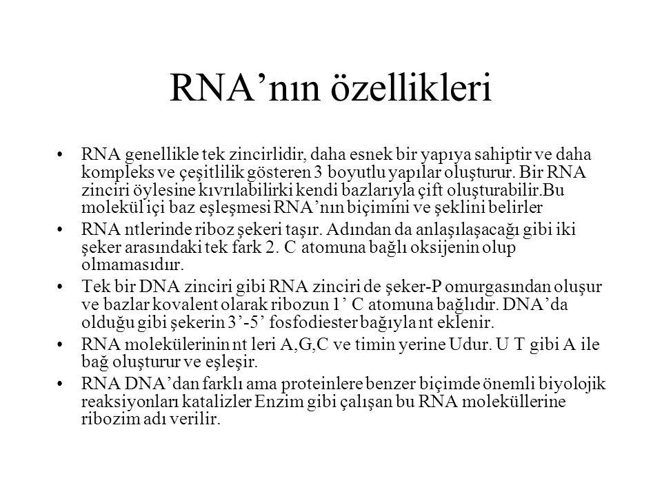 RNA'nın özellikleri RNA genellikle tek zincirlidir, daha esnek bir yapıya sahiptir ve daha kompleks ve çeşitlilik gösteren 3 boyutlu yapılar oluşturur