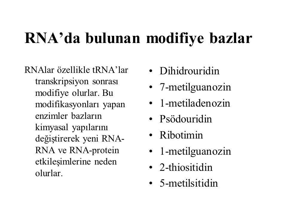 RNAlar özellikle tRNA'lar transkripsiyon sonrası modifiye olurlar. Bu modifikasyonları yapan enzimler bazların kimyasal yapılarını değiştirerek yeni R