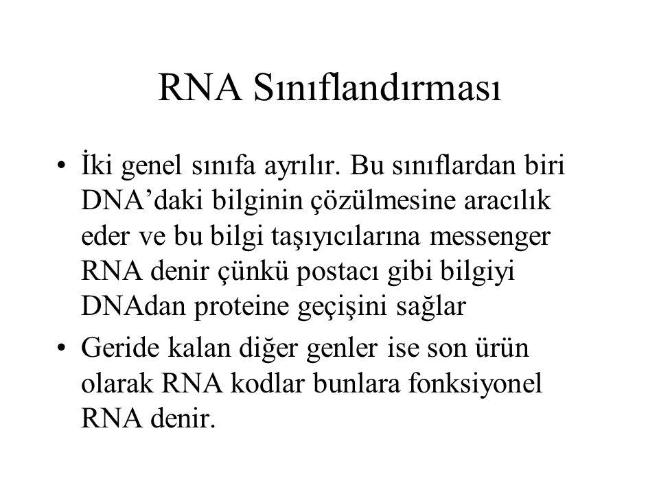 RNA Sınıflandırması İki genel sınıfa ayrılır. Bu sınıflardan biri DNA'daki bilginin çözülmesine aracılık eder ve bu bilgi taşıyıcılarına messenger RNA