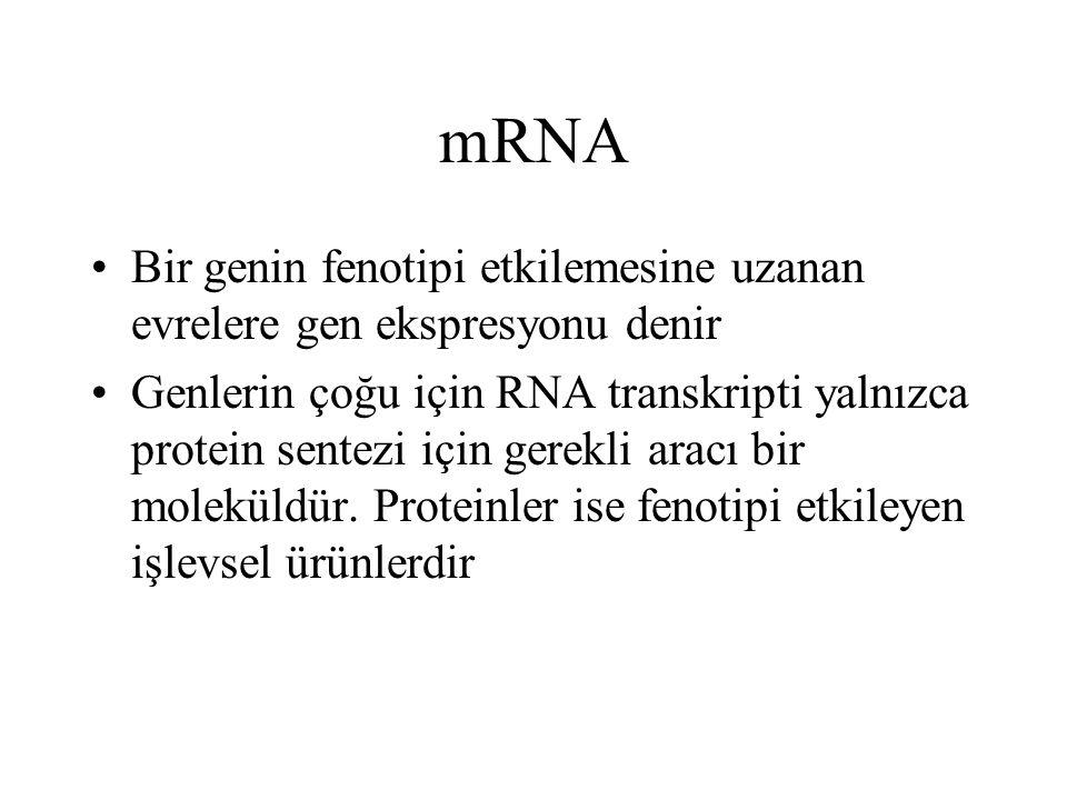mRNA Bir genin fenotipi etkilemesine uzanan evrelere gen ekspresyonu denir Genlerin çoğu için RNA transkripti yalnızca protein sentezi için gerekli ar