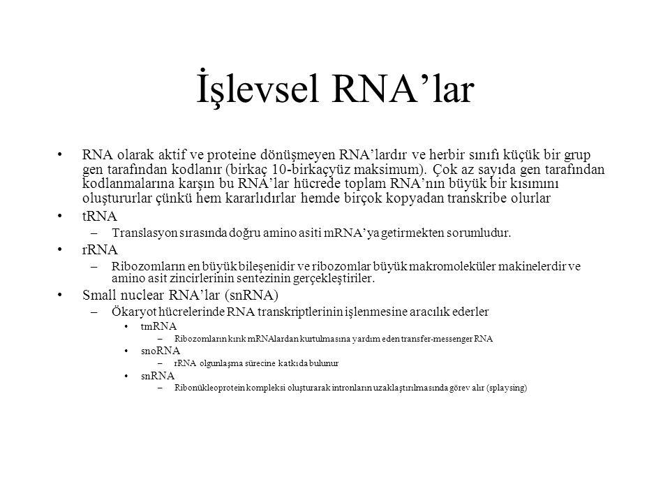 İşlevsel RNA'lar RNA olarak aktif ve proteine dönüşmeyen RNA'lardır ve herbir sınıfı küçük bir grup gen tarafından kodlanır (birkaç 10-birkaçyüz maksi