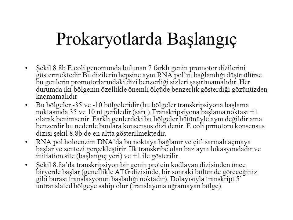 Prokaryotlarda Başlangıç Şekil 8.8b E.coli genomunda bulunan 7 farklı genin promotor dizilerini göstermektedir.Bu dizilerin hepsine aynı RNA pol'ın ba