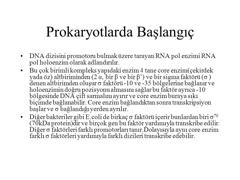 Prokaryotlarda Başlangıç DNA dizisini promotoru bulmak üzere tarayan RNA pol enzimi RNA pol holoenzim olarak adlandırılır. Bu çok birimli kompleks yap