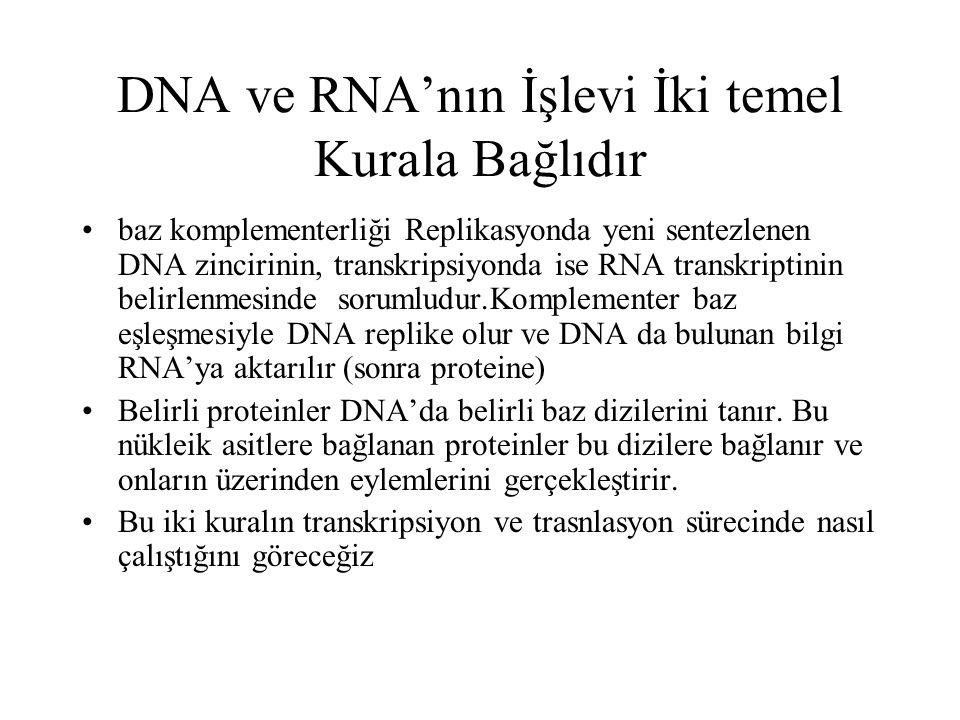 DNA ve RNA'nın İşlevi İki temel Kurala Bağlıdır baz komplementerliği Replikasyonda yeni sentezlenen DNA zincirinin, transkripsiyonda ise RNA transkrip