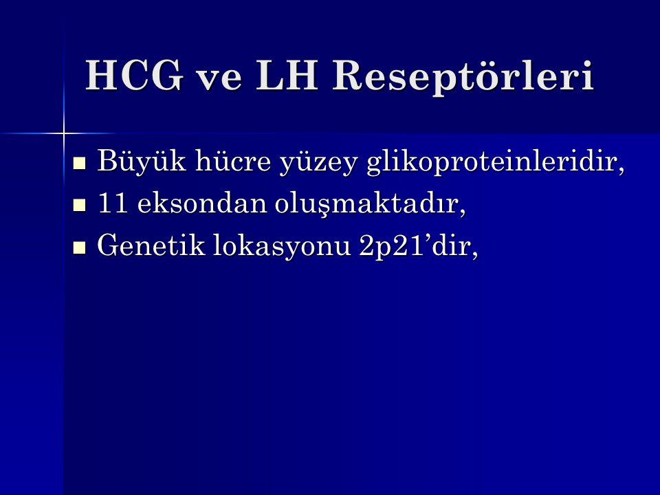 HCG ve LH Reseptörleri Büyük hücre yüzey glikoproteinleridir, Büyük hücre yüzey glikoproteinleridir, 11 eksondan oluşmaktadır, 11 eksondan oluşmaktadı