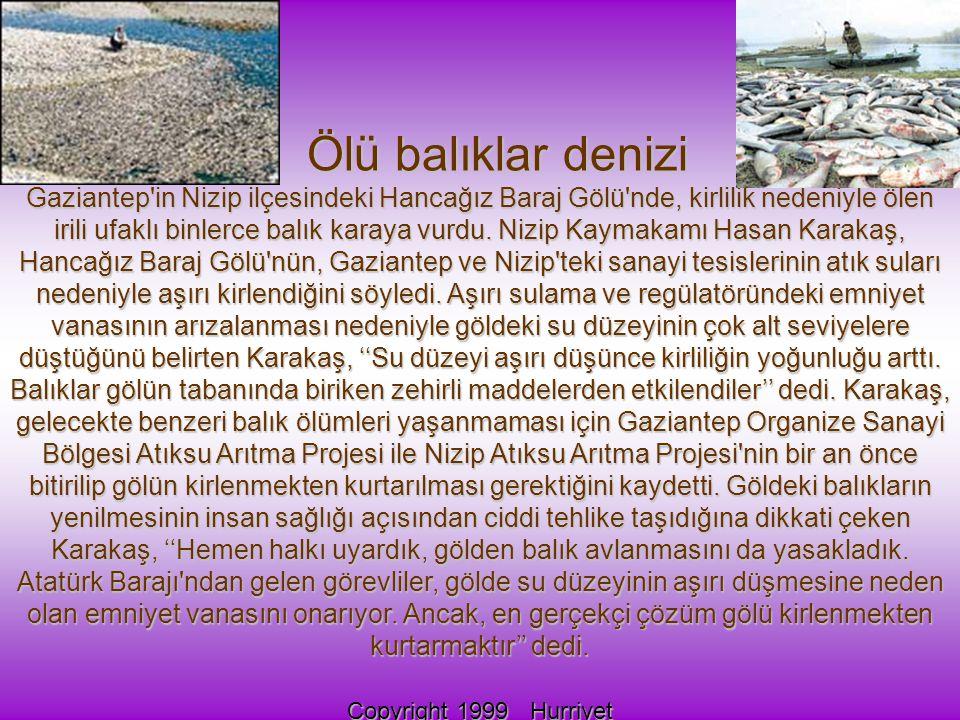 Ölü balıklar denizi Ölü balıklar denizi Gaziantep in Nizip ilçesindeki Hancağız Baraj Gölü nde, kirlilik nedeniyle ölen irili ufaklı binlerce balık karaya vurdu.