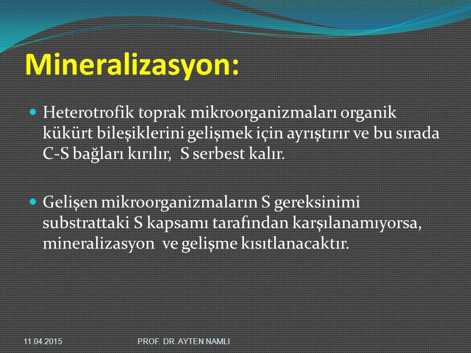 Mineralizasyon: Heterotrofik toprak mikroorganizmaları organik kükürt bileşiklerini gelişmek için ayrıştırır ve bu sırada C-S bağları kırılır, S serbe