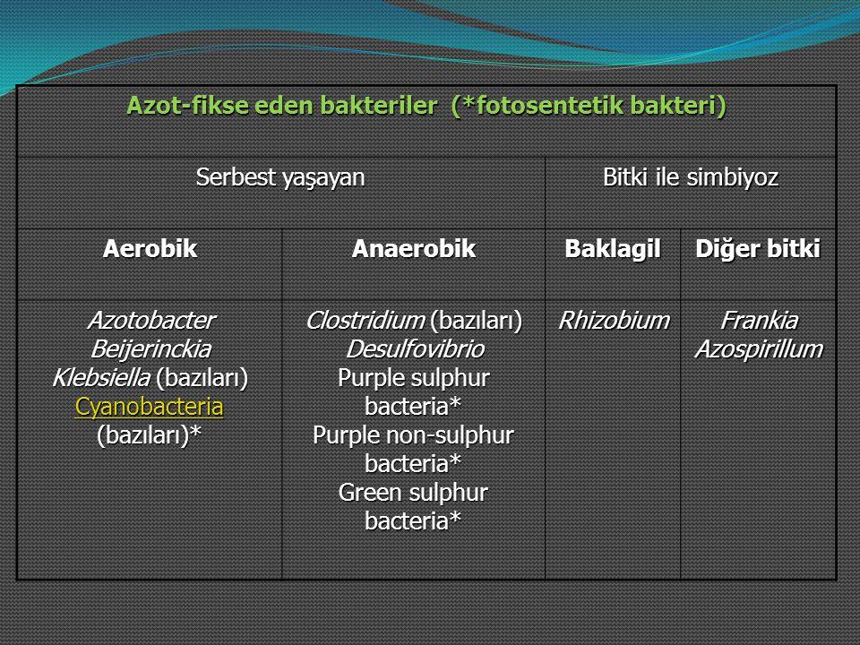 Azot-fikse eden bakteriler (*fotosentetik bakteri) Serbest yaşayan Bitki ile simbiyoz AerobikAnaerobikBaklagil Diğer bitki Azotobacter Beijerinckia Kl