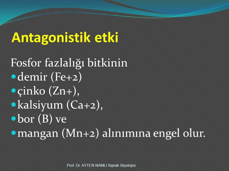 Antagonistik etki Fosfor fazlalığı bitkinin demir (Fe+2) çinko (Zn+), kalsiyum (Ca+2), bor (B) ve mangan (Mn+2) alınımına engel olur.