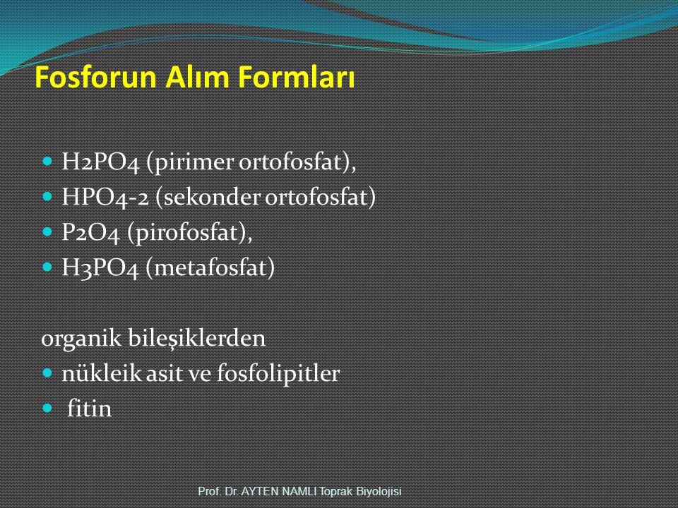 Fosforun Alım Formları H2PO4 (pirimer ortofosfat), HPO4-2 (sekonder ortofosfat) P2O4 (pirofosfat), H3PO4 (metafosfat) organik bileşiklerden nükleik asit ve fosfolipitler fitin Prof.