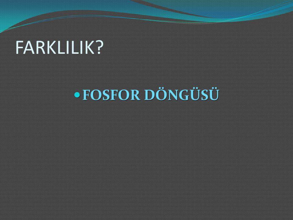 FARKLILIK? FOSFOR DÖNGÜSÜ FOSFOR DÖNGÜSÜ