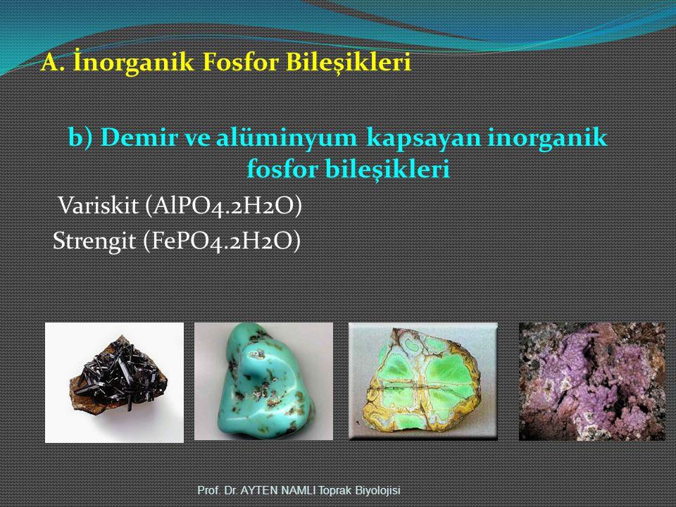 A. İnorganik Fosfor Bileşikleri b) Demir ve alüminyum kapsayan inorganik fosfor bileşikleri Variskit (AlPO4.2H2O) Strengit (FePO4.2H2O) Prof. Dr. AYTE