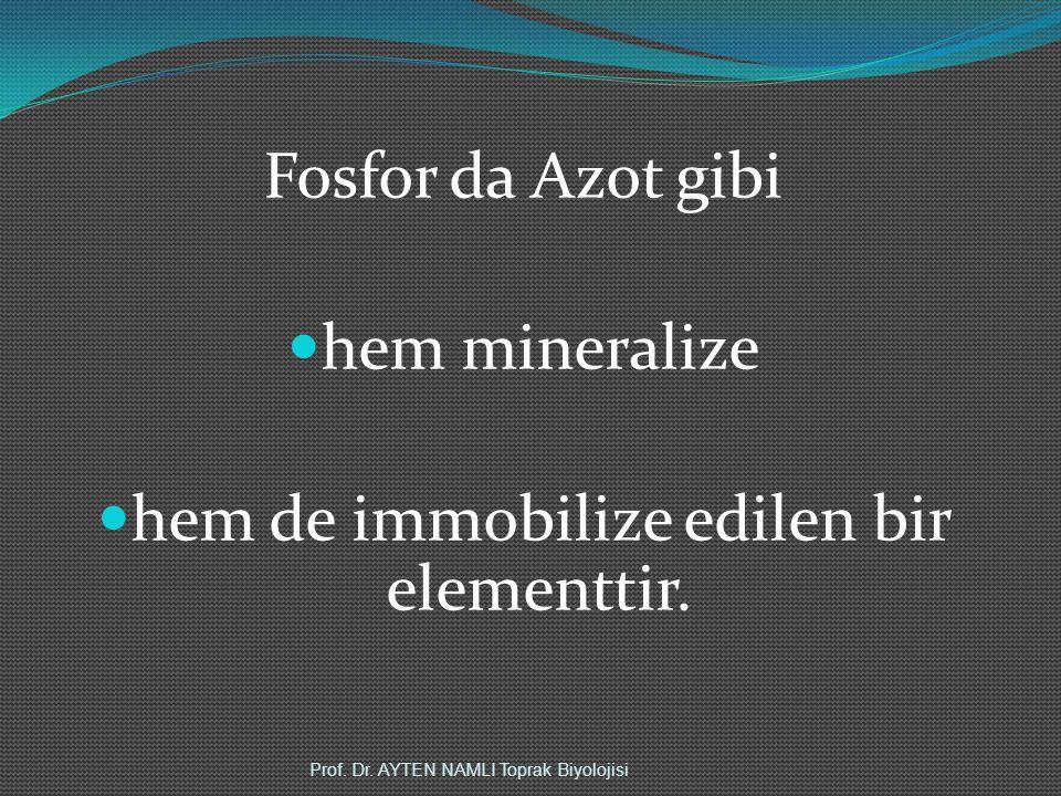 Fosfor da Azot gibi hem mineralize hem de immobilize edilen bir elementtir. Prof. Dr. AYTEN NAMLI Toprak Biyolojisi