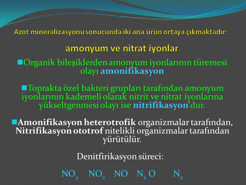 Organik bileşiklerden amonyum iyonlarının türemesi olayı amonifikasyon Toprakta özel bakteri grupları tarafından amonyum iyonlarının kademeli olarak n